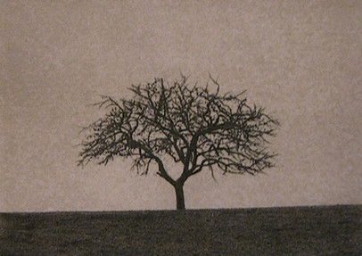 Solitary Tree, 2008