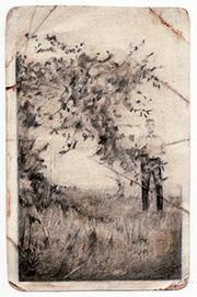 Apple Tree, 2006