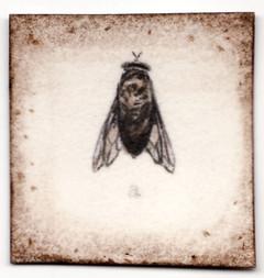 Fly, 2008
