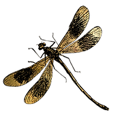Christian Bradley West_DragonFly.png