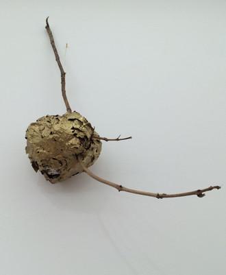 Gilded Hornet's Nest, 2016