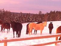 Horse Events Williams Lake, BC