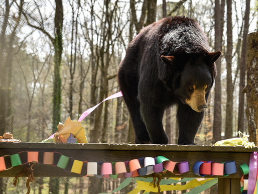 Bear Hollow Zoo: Did you know Athens has a FREE Zoo!