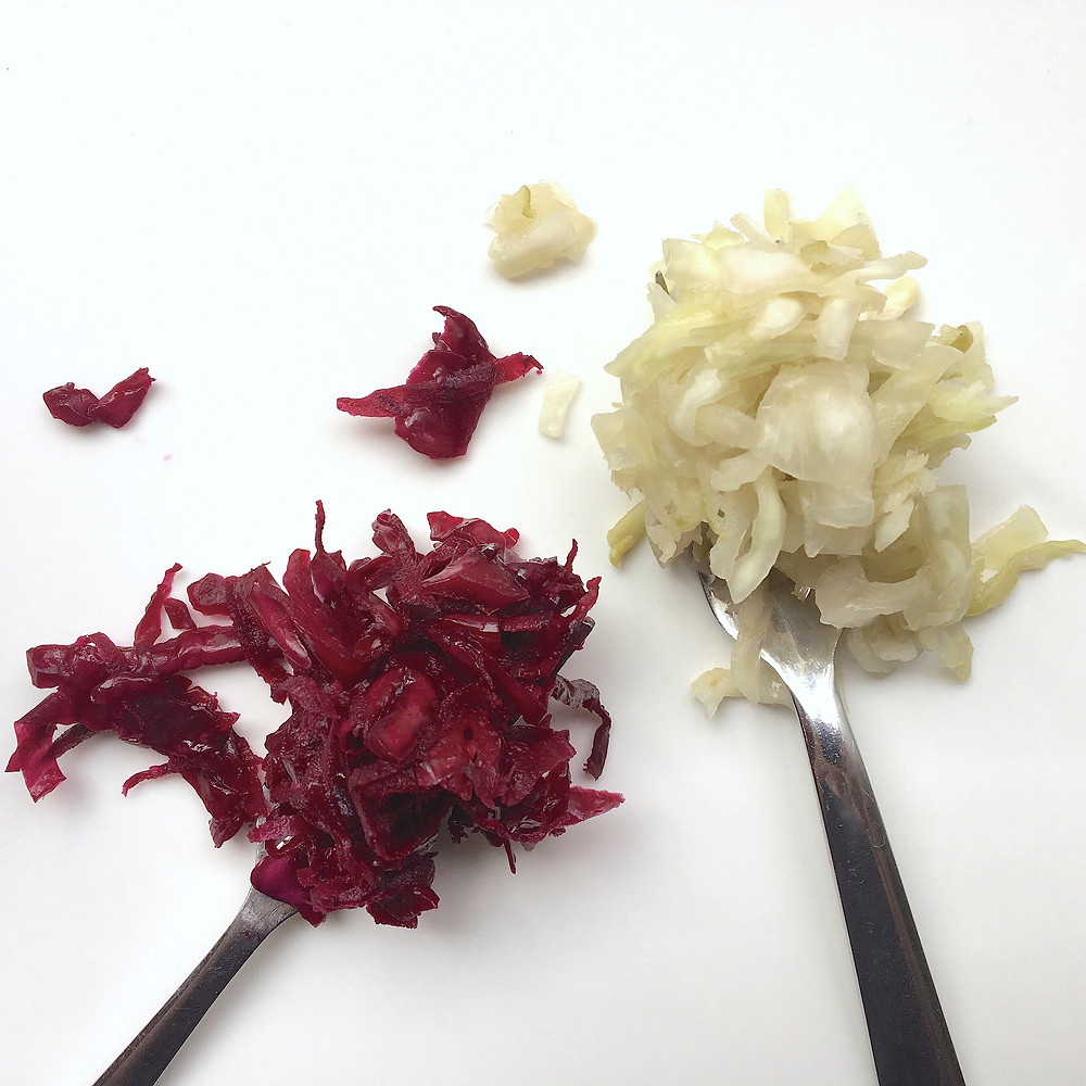 Two forks with red and white fermented cabbage on each of them