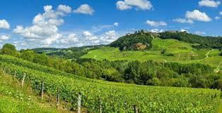 Plan de soutien à la viticulture de vraies avancées !