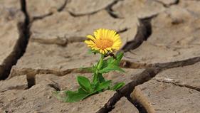 Question concernant les arrêtés de catastrophe naturelle de type sécheresse