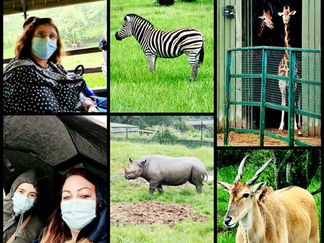 A trip to Port Lympne Zoo for Wayfield Road....