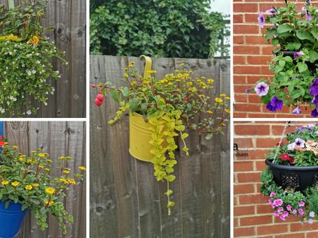 Homersham supported living, brightening up their garden!