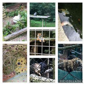 A birthday treat to Port Lympne Zoo....