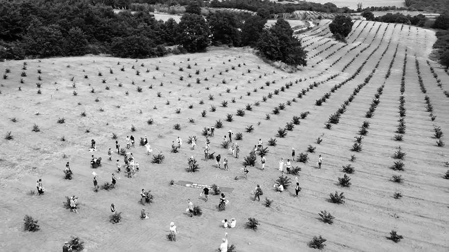 Hazelnut-planting-Torre-Alfina.jpg