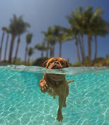 Eleanor swimming.jpeg