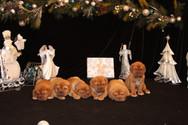 Star Pups at 7 weeks old (87).JPG