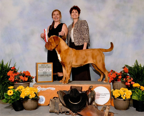 AKC Champion Bordeaux