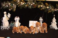 Star Pups at 7 weeks old (100).JPG
