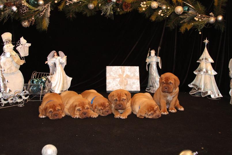 Star Pups at 7 weeks old (85).JPG