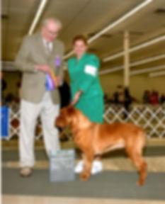 French Mastiff,   www.puppycreek.com