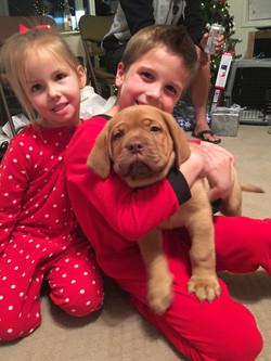 Christmas Puppy 2018