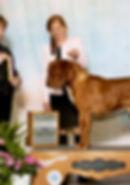 Bordeaux puppies for sale