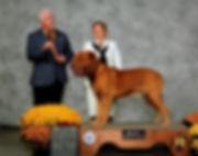 Dogue de Bordeaux AKC Champion