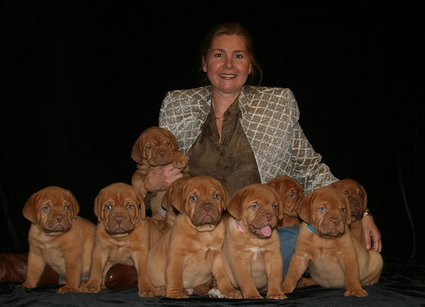 Bordeaux Puppies AKC