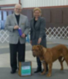 French Mastiff   www.puppycreek.com