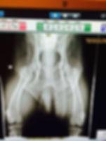 OFA X-Ray