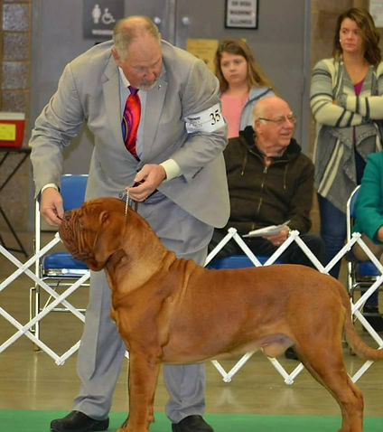 GCH Dogue de Bordeaux