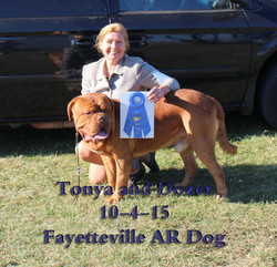 Dozer N Tonya dogs show FAY