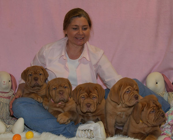 AKC Chamion Dogue de Bordeaux Puppies