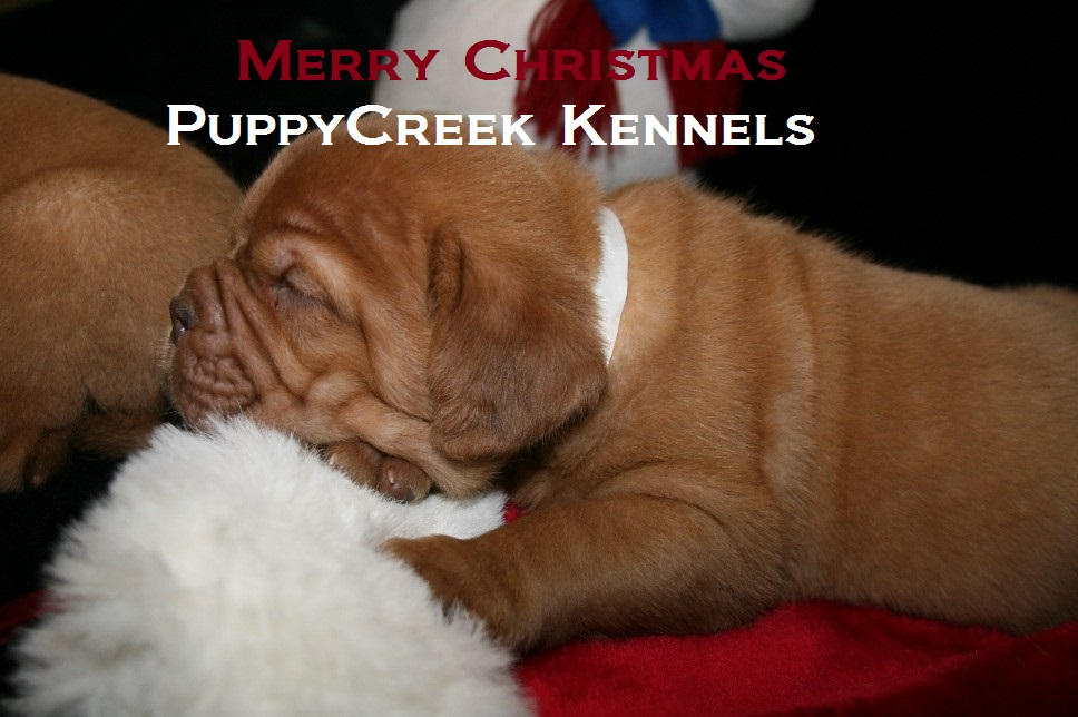 Christmas Puppy 2010