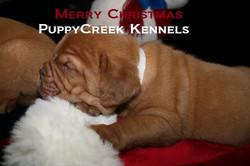 Christmas Puppy 2010