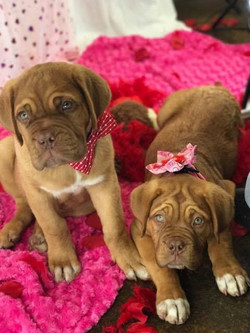 Candy pups gone home