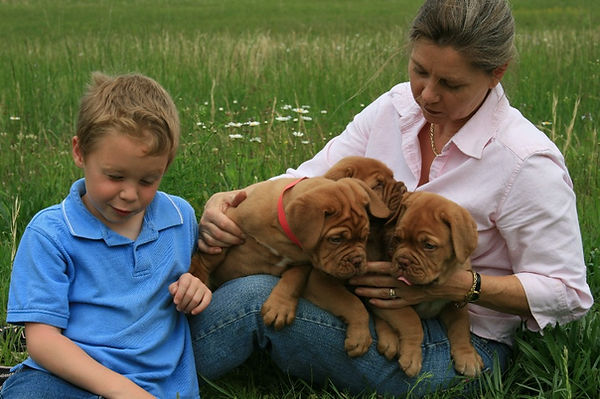AKC Champion Dogue de Bordeaux