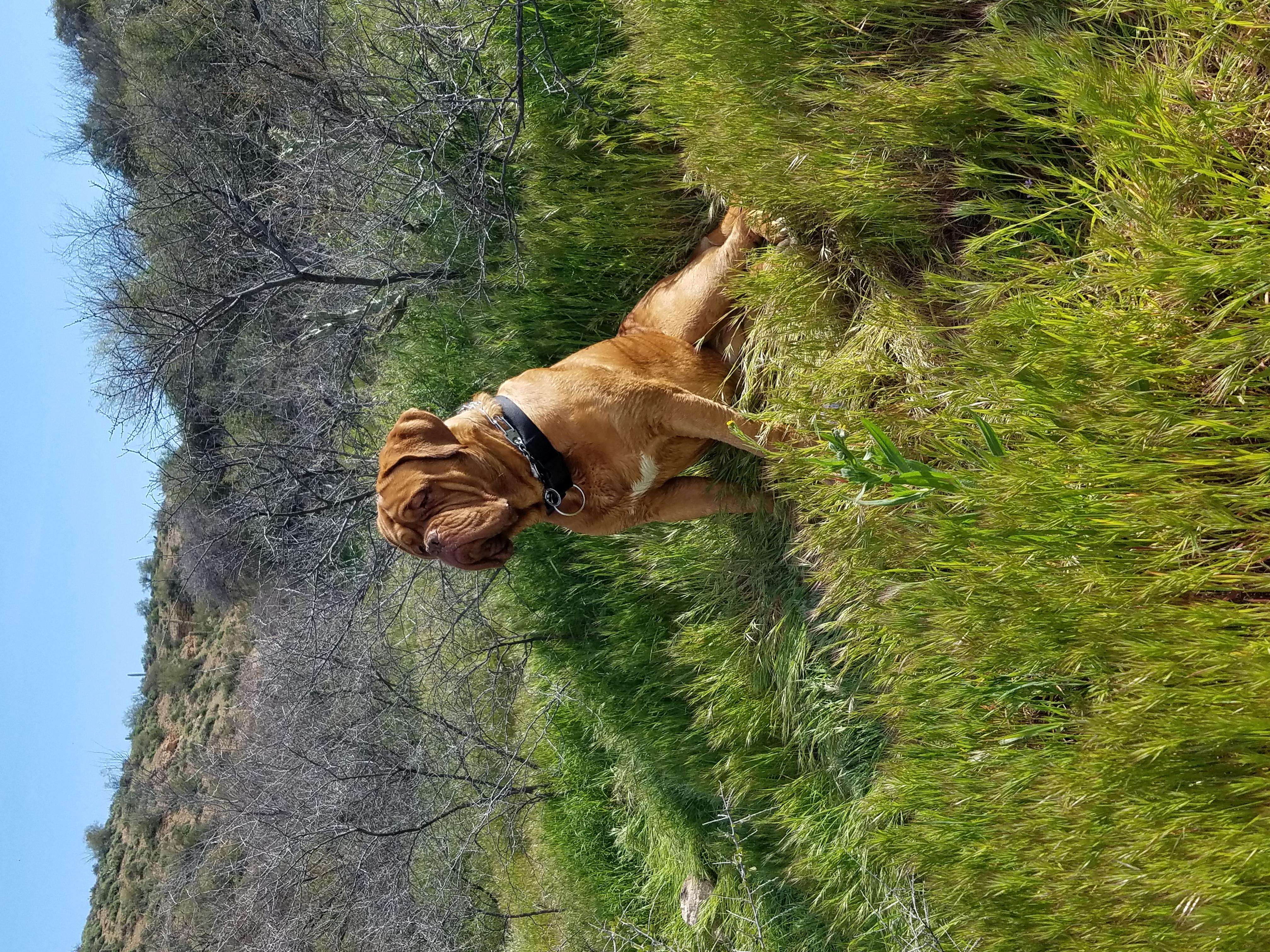 PuppyCreeks Rocco