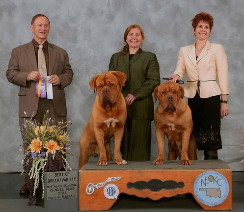 AKC Champion Dogue de Bordeaux Show Kennel