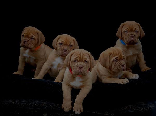 Violet Pups.jpg