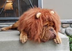 puppycreek baloo Halloween
