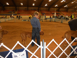 Levi & Peaches in the Show ring TX 2012