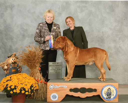 AKC Dogue de bordeaux Show Kennel