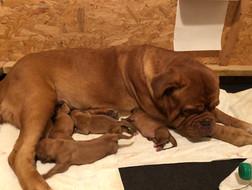 Stella & Pups day 2