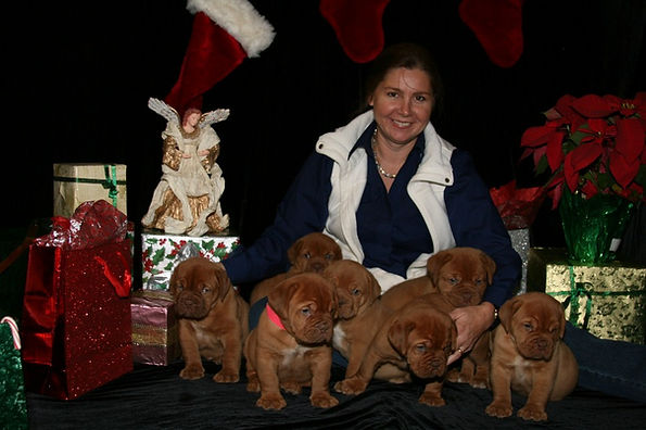 Champion Bred Dogue de Bordeaux