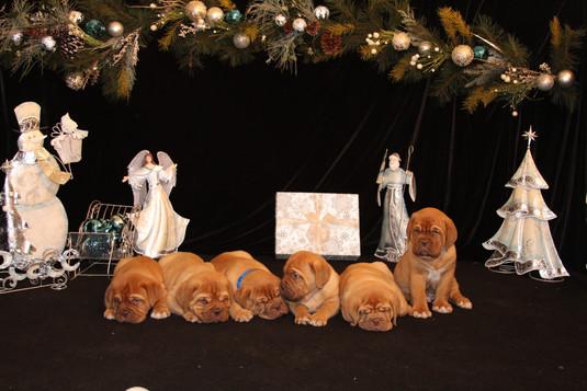 Star Pups at 7 weeks old (89).JPG