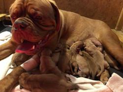 Star pups new born (5)