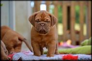 baby Primo (10).jpg