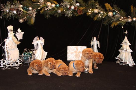 Star Pups at 7 weeks old (95).JPG