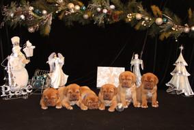 Star Pups at 7 weeks old (99).JPG
