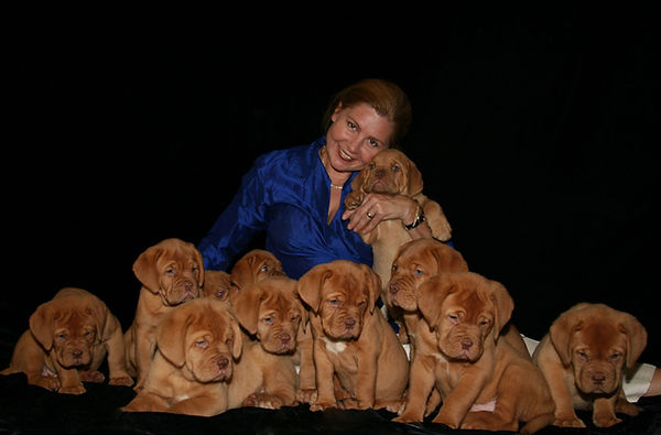 Bordeaux puppies for sale