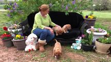 Violet Puppies - 8 weeks