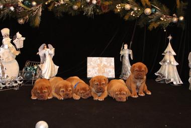 Star Pups at 7 weeks old (86).JPG