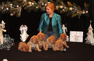 Star Pups at 7 weeks old (83).JPG